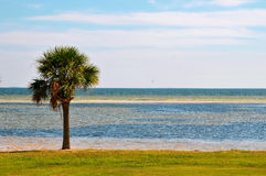 Lone Palm tree next to the Bay Royalty Free Stock Photos