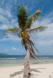Lone Palm Tree In Paradise Royalty Free Stock Photos