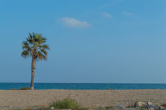 Lone palm tree in the sea Royalty Free Stock Photo