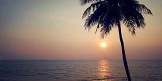 Lone palm tree on the sunset - retro filter. Sunset in Varkala, Kerala, India. Royalty Free Stock Images