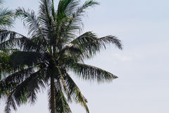 Lone palm tree in tropical setting on the beach with fresh airy stock photography
