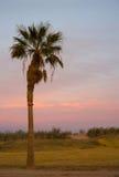 Lone Palm Tree West Coast Sunset Stock Photos