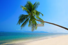 Lone palm on tropical coast Royalty Free Stock Photos