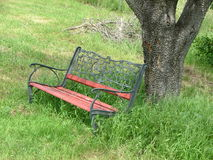 Lone Park Bench. The bench sits alone in an abandoned part of a public park.  Sitting alone under a tree as the grass grows around it Royalty Free Stock Photography