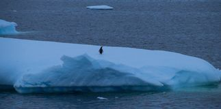 A Lone Penguin on a Hunk of Ice Off the Coast of Antarctica stock photo