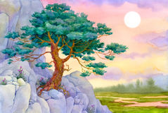 Lone pine. Watercolor landscape. Lone pine grown on an inaccessible cliff Stock Photography