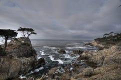 Lone Pine Royalty Free Stock Image
