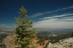 Lone pine. Taken from the top of a cliff in Utah stock photos
