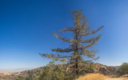 Lone Pine Above California Hills Stock Images