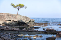 Lone Pine on the cliff stock photos