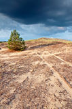 Lone pine on the hill 2. Small spruce on the hill. Soon it will rain. Landscape Stock Images