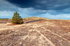 Lone pine on the hill. Small spruce on the hill. Soon it will rain. Landscape Stock Photo