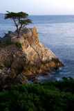 Lone Pine Rock at Pebble Beach. The famous Lone Pine rock on the shore at Pebble Beach with a foreground of pine trees Royalty Free Stock Photos