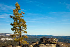 Lone Pine Tree. Lone coniferous tree at Smith Peak in Yosemite National Park, California Stock Photography