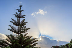 Lone pine tree with beautiful blue sky background. Stock Photos