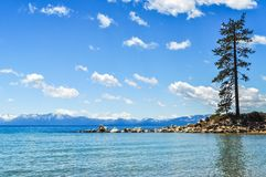 Lone Pine Tree On a Boulder Beach at Lake Tahoe stock photography