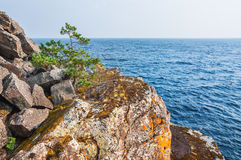 Lone pine tree on a cliff by the sea. Royalty Free Stock Images