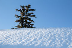Sky, tree and snow Royalty Free Stock Photos