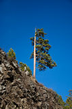 Lone pine tree on the hill Stock Photography