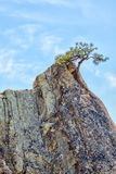 Lone pine tree in sandstone pinnacle Royalty Free Stock Photos