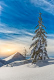 Lone pine tree Stock Images