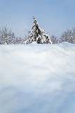 Lone pine tree in a snowy field. Postcard views. Stock Photo