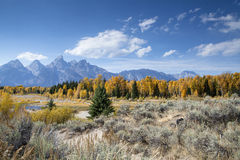 Lone Pine. A lone pine tree stands in the brush at the Grand Teton National Park Royalty Free Stock Images