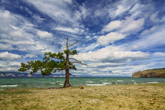A lone pine tree at the Small Sea Stock Photo