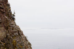 Lone pine tree on mountain cliff beside ocean Royalty Free Stock Photo
