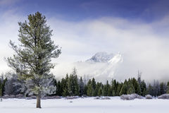 Lone pine tree in winter with fog and Idaho mountain Stock Images