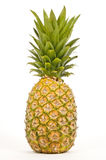 Lone Pineapple Stock Photography