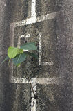 Lone plant growing out of a wall Stock Image