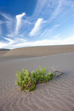 Lone plant in the sand. Royalty Free Stock Photo