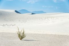 The lone plant in the white sand Stock Image