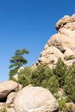 Lone Ponderosa Pine at Turtle Rocks Colorado Stock Photos