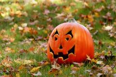 Lone pumpkin stock image