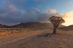 Lone Quiver Tree Royalty Free Stock Photos