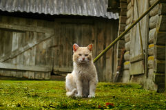 lone röd by för katt arkivbilder