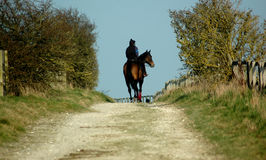Lone Racehorse walking down country lane Royalty Free Stock Photography