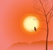 Lone raven Stock Photo