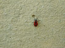 Red bug angel on the background of the cement wall royalty free stock photo