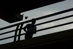 Lone Runner in Silhouette. In silhouette, a lone runner jogs across a bridge while one bird watches and another flutters nearby Stock Photo