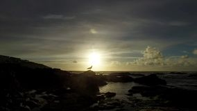 A lone seagull looking out to sea with the sun going down and waves lapping with the tide going out. stock video