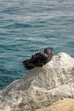 A lone seagull in Lovran, Adriatic Sea, Croatia, Istria region Stock Images