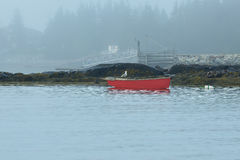 A lone seagull and red rowboat Royalty Free Stock Images