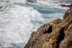 Lone seagull on rocky cliff Royalty Free Stock Images