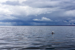 A lone seagull in the sea bay Royalty Free Stock Photography