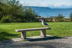 Seagull On Bench. A lone seagull site on a cement bench at Seahurst Beach Park in Burien, Washington stock photos