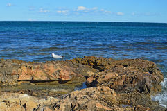 A Lone Seagull Sitting On Rocks By The Sea Stock Photography