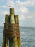 Lone seagull on wood pier piling on ocean coast in Massachusetts Royalty Free Stock Images